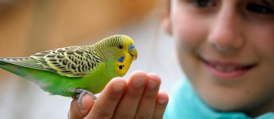 caring for a bird